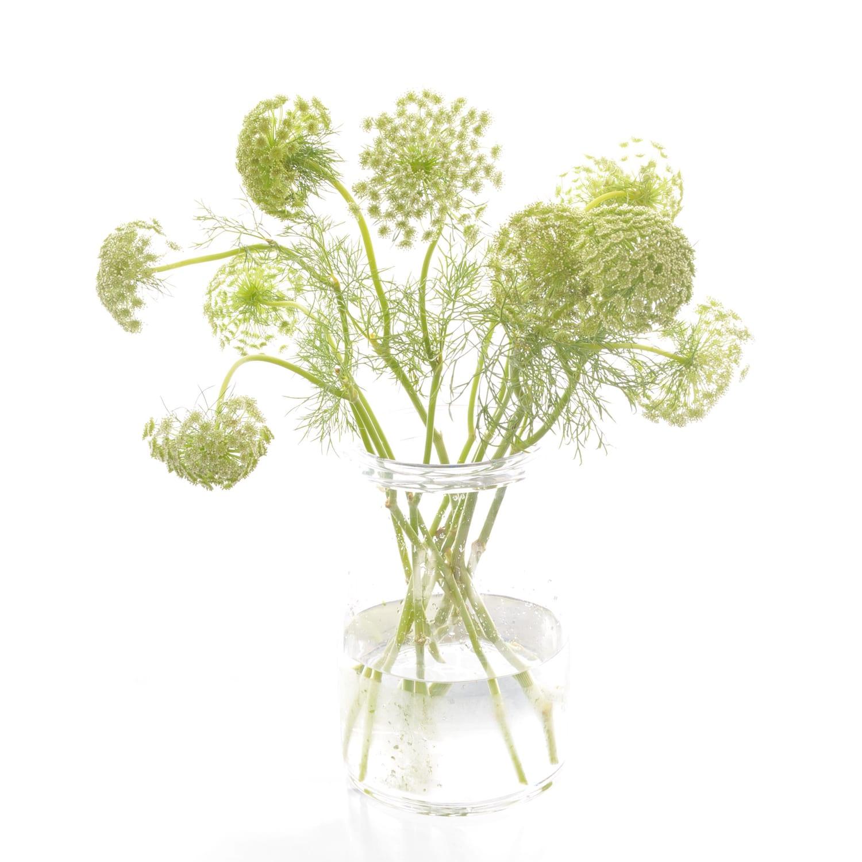 Ammi Bouquet of Flowers Kirkby Lonsdale Florist