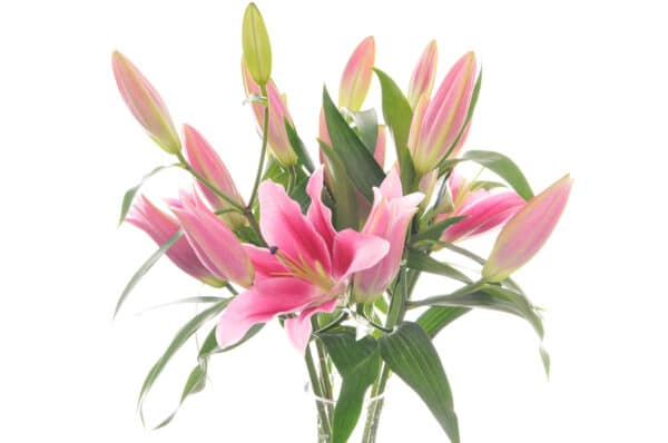 Lily Bouquet of Flowers Kirkby Lonsdale Florist